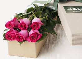 hot pink roses beautiful roses hot pink flowers gift ideas for