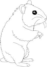 Coloriage Petit hamster à imprimer sur COLORIAGES info