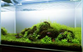 Aquascape Lighting Planted Tank Seven Stones By Augusto Veneruso Aquarium Design