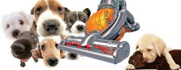 Best Pet Vaccum Top 10 Best Lightweight Vacuum For Pet Hair Reviews
