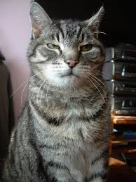 Monday Cat Meme - oh really cats know your meme