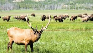 North Dakota wildlife images Plants animals native to north dakota sciencing jpg