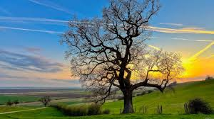 photo collection wallpaper landscape trees beautiful