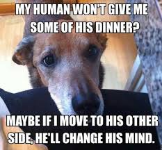 Dog Owner Meme - hilarious dog owners situations 11 dogs rule pinterest dog