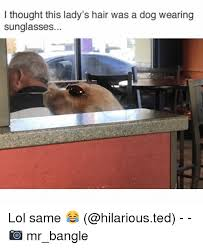 Dog Lady Meme - i thought this lady s hair was a dog wearing sunglasses lol same