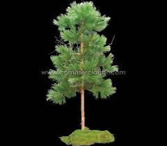 artificial pine tree needle pine 8 commercial silk