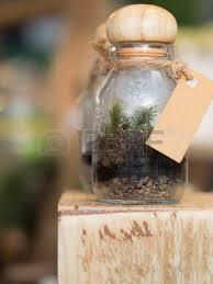 terrarium small garden in bottle look so nice for home