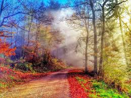 fall desktop pic tree leaves splendor nature autumn walk colorful park forest road