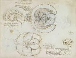anatomy u2014 discovering da vinci