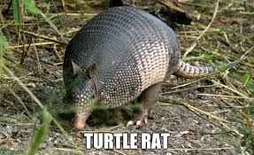 Armadillo Meme - the 20 funniest animal memes