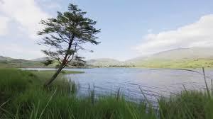 relax in hd windy tree lake