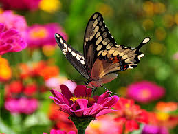 3 looking images of butterflies and flowers