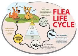 flea free just another wordpress site