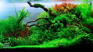 Aquascape Fish New Terrarium Diy Smart Planted Fish Tanks The Clever Life