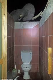 Bathroom Peep Holes Botswana Elephants Enjoy Drinking From A Toilet Rather Than Their