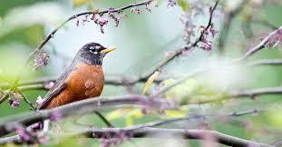 benefits attracting birds garden spring