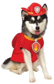 halloween dog shirts amazon com paw patrol skye dog costume pet supplies