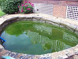 why did my pond water turn green lexington kentucky ky h2o designs