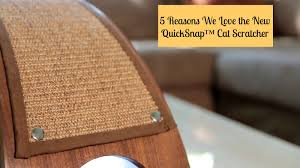 melissa u0027s mochas mysteries and meows 5 reasons we love the new