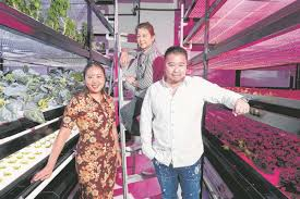 vertical farms on the rise in land scarce singapore packet greens