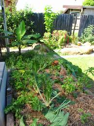 Garden Soil Types Raised Veggie Gardens Libertas Food Gardens