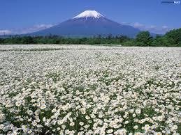 field of daisies dreamy escape pinterest