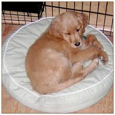 Ll Bean Dog Bed Ll Bean Dog Beds Gorgeous 203 Best Best Friends Images On