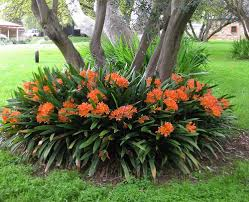 plants u0026 flowers indoor plants