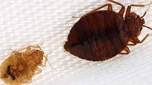 National Bed Bug Registry 15 Tips For Avoiding Hotel Bedbugs Health