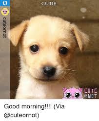 Dog Cutie 10h Cute 0d Cuteornot Good Morning Via HD Wallpaper