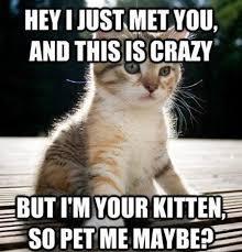 Funny Kitten Memes - i m your kitten so pet me maybe clattr