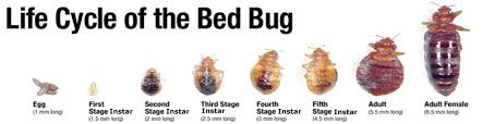What Temperature Do Bed Bugs Die Bed Bug Treatment Bed Bug Pest Exterminator Bed Bugs All Gone