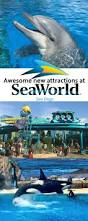 Sea World San Antonio Map by 71 Best Sea World San Diego Images On Pinterest Sea World