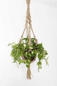 magical thinking hand knotted hanging plant holder for the home