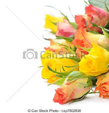 multicolored roses bouquet of multicolored roses isolated on white background