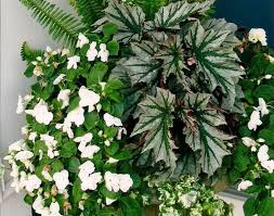 grow tropical indoor plants helpful tips ideas real green plants