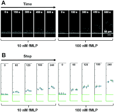 a dual docking microfluidic cell migration assay d 2 chip for