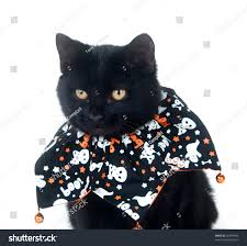 pet halloween background top 7 cats with pumpkins animalblog cute black and white