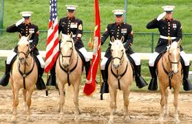 marine mounted color guard simply marvelous horse world