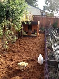 roof garden coop backyard chickens