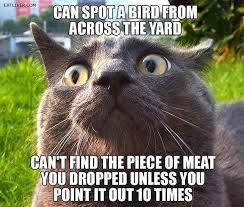 Funny Bird Memes - animal memes can spot a bird funny memes