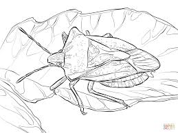 stink bug coloring free printable coloring pages