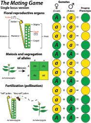 fpsc genetics evolution modern genetic sciences