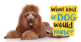 dog quiz what dog are you quiz quizony com