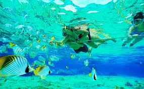 Wyoming snorkeling images 5 best places for snorkeling and scuba diving in florida evans jpg
