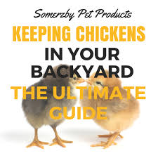 keeping chickens the ultimate beginners guide for the australian