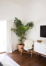 60 best indoor plants decor ideas for apartment and home air