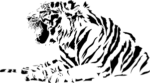 both black and white tiger vector vector