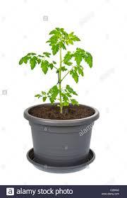 clay pot stock photos u0026 clay pot stock images alamy