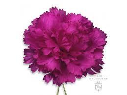 purple carnations purple carnation boutonniere size lapel flower fort belvedere